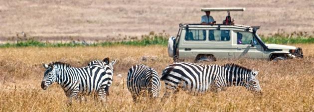 Safari in Bela Bela
