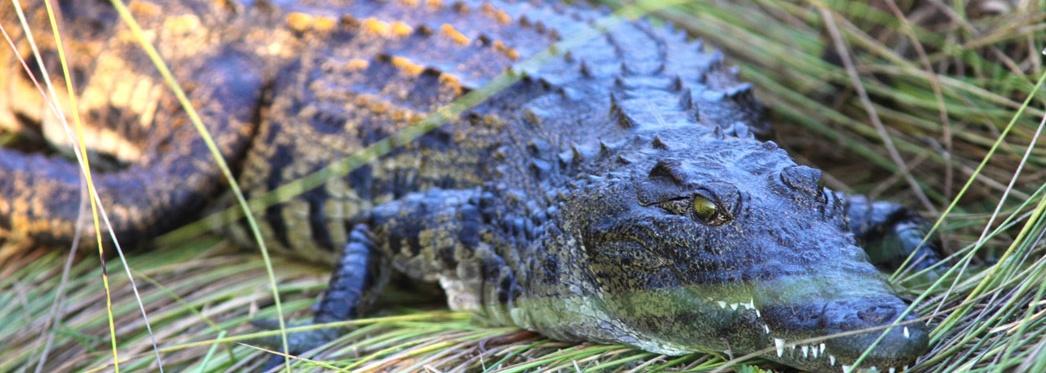 Summerset Place Crocodile Farm